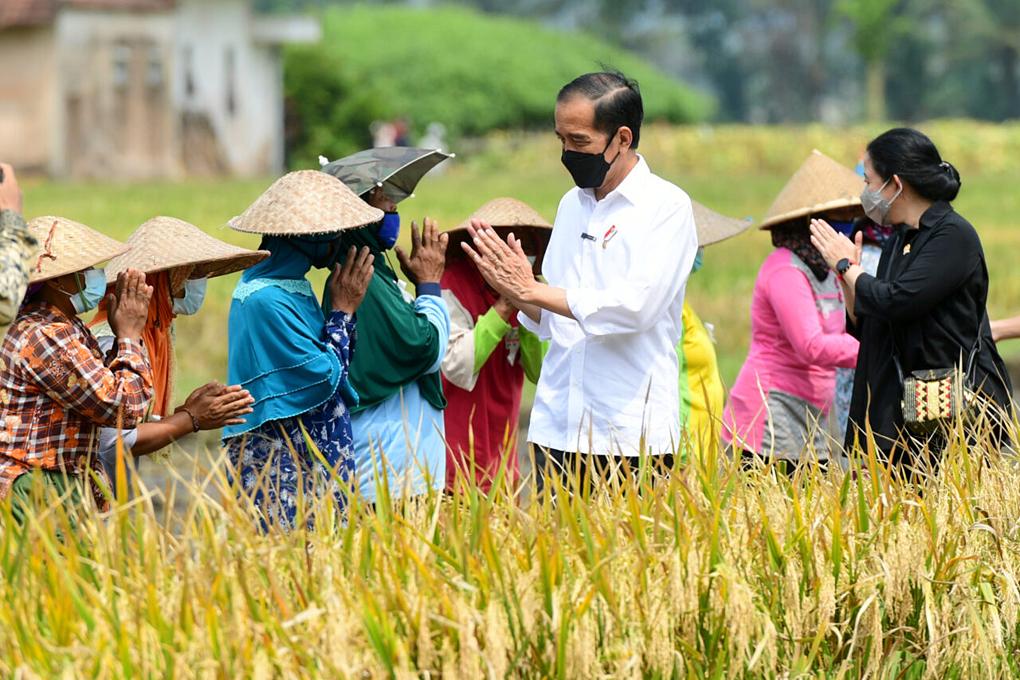 Presiden Jokowi Tinjau Proses Tanam dan Panen Padi di Malang