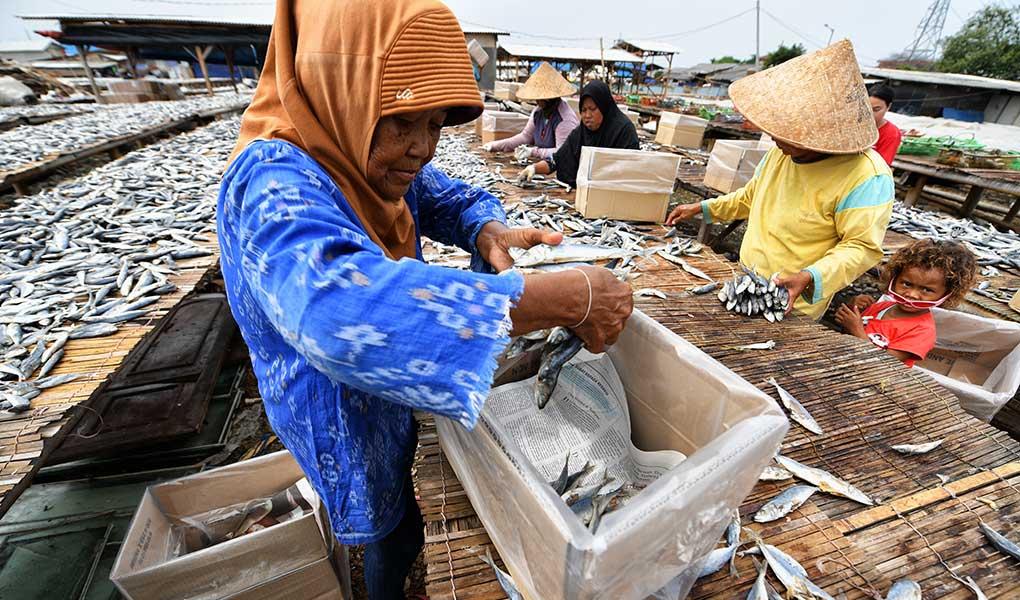 Cuaca Pengaruhi Produksi Ikan Asin